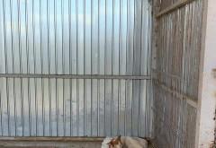 """Daca tot s-a infiintat Politia Animalelor, poate merg agentii """"in vizita"""" si la adapostul din Targsor, unde cainii sunt tinuti nemancati si lasati sa se inmulteasca in conditii jalnice"""