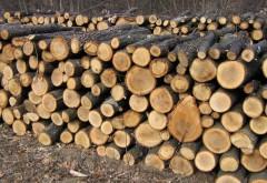 Societăți comerciale din Prahova, sancționate pentru că furnizau material lemnos ilegal