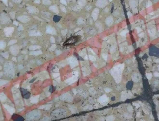 Gândaci pe holurile Spitalului Județean de Urgență Ploiești VIDEO