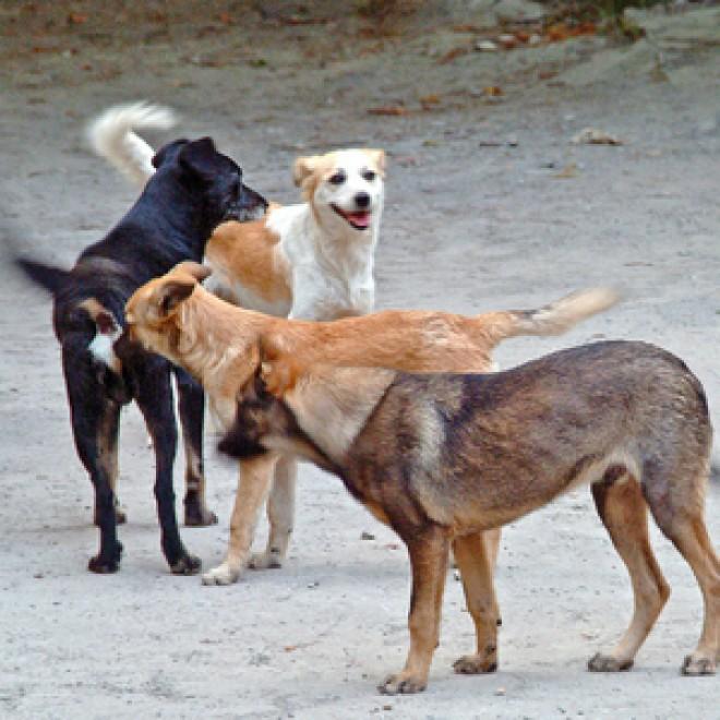 Ploieştenii din zona Baraolt, TERORIZAŢI de câinii maidanezi