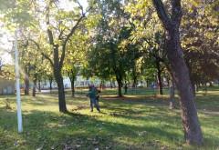 SGU Ploieşti a tăiat 25 de arbori din oraş, în ultimele zile