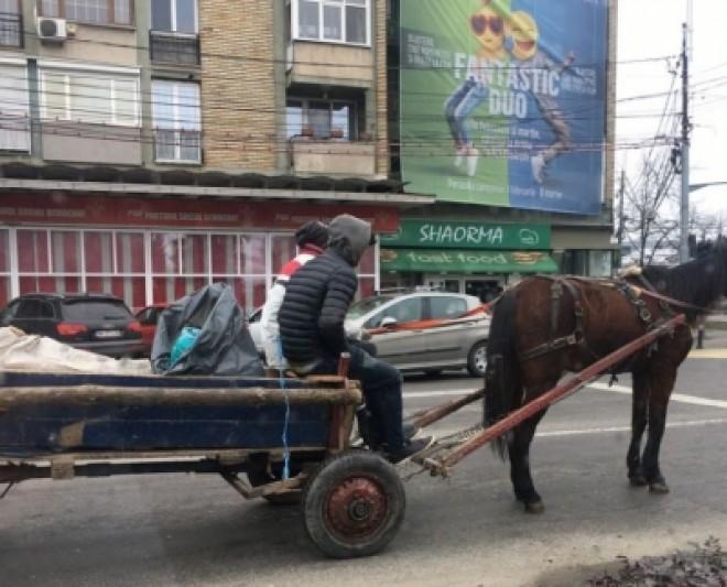 Proiectul de INTERZICERE a căruţelor în Ploieşti a fost publicat pe site-ul Primăriei. Vezi ce sancţiuni sunt propuse!