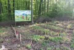 Direcția Silvică împădurește Prahova. Pe zeci de hectare au fost plantați stejari și frasini