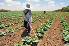 Agricultura organică, șansa ratată a României