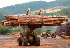 Directia Silvica Prahova vinde la licitatie 32.000 metri cubi de masa lemnoasa pe picior