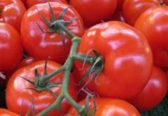 Sprijin financiar de la Guvern pentru producătorii de tomate