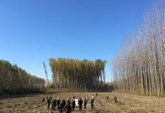 Fermierii primesc 50 de milioane de euro pentru împăduriri, până la 31 martie