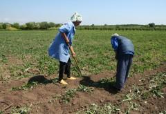 Agricultorii din sectorul vegetal primesc sprijin financiar