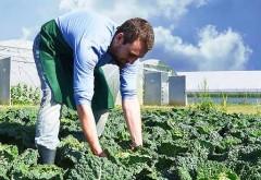 5,5 milioane lei, bani de la Guvern pentru sprijinirea temporară a producătorilor de legume și fructe