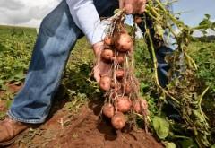 Ministerul Agriculturii începe plata subvenţiilor pentru fermieri