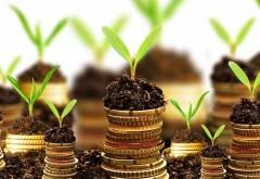 Cum să câştigi sute de mii de euro din vânzarea unei plante
