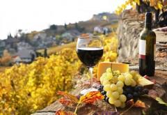 Fonduri europene DISPONIBILE pentru investiţii în crame, laboratoare şi săli de degustarea vinului