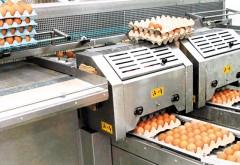 O cooperativă agricolă din Ploieşti vinde ouă de 5 mil. euro în Kaufland, Metro, Auchan şi Penny. Vezi aici despre cine e vorba