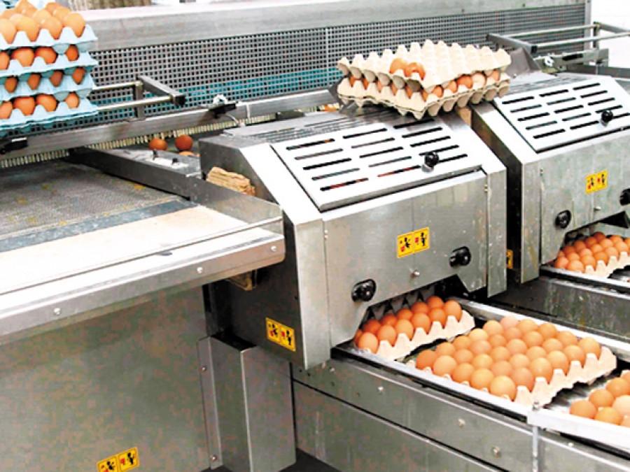 O cooperativă agricolă din Ploieşti vinde ouă de 5 mil. euro în Kaufland 8bb802d91c3