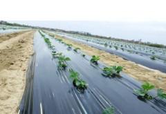 Protejarea solului si a culturii prin procesul de mulcire. Afla mai multe despre asta