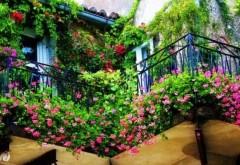 Cum să îţi transformi balconul într-o adevărată grădină GALERIE FOTO