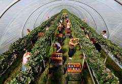 AJOFM Prahova: Locuri de muncă sezonieră  în AGRICULTURA  - SPANIA - CAMPANIA 2018