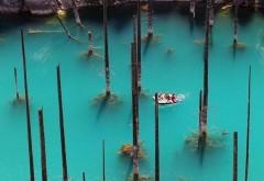 Misterul lacului unde copacii par să crească invers