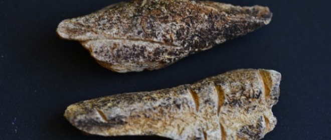 Descoperire extraordinară în Neamț: două oase gravate, cu o vechime de 20.000 – 24.000 de ani