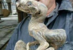 Creatura ciudata descoperita in Siberia! Ce este acest animal
