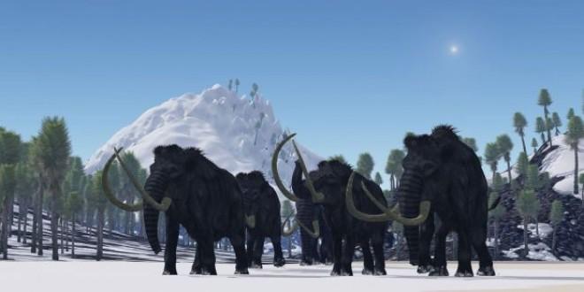 Au disparut acum 4.000 de ani, dar acum s-a luat decizia! Ce se va intampla cu MAMUTII