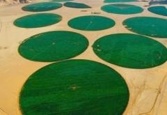 Agricultură în mijlocul deșertului. Cum reușesc beduinii să transforme zonele aride în unele propice cultivării. Imagini care iti taie respiratia!