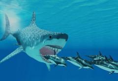 O nouă specie de rechin preistoric uriaş a fost descoperită. Era o adevărată ''maşinărie de ucis''