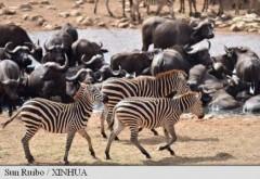 """Pământul se confruntă cu """"anihilarea bilogică"""" a speciilor sale animale, a 6-a extincție în masă - deja în curs (studiu)"""