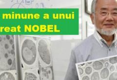 Dieta japonezului laureat cu premiul Nobel: ajută la scăderea în greutate, întinerire şi regenerare celulară