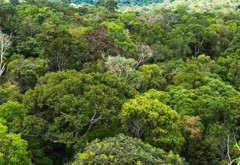 ''Aurul verde'': Pakistanul a plantat sute de milioane de arbori pentru a stopa despădurirea. Schimbarea este uriasa