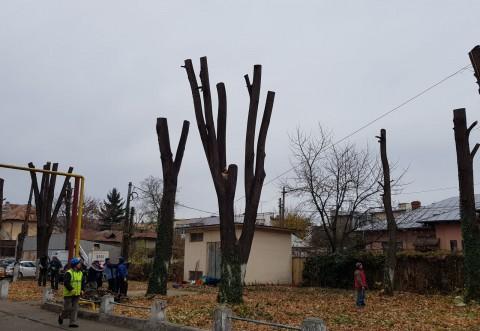Angajatii SGU au inceput toaletarea copacilor. Vezi aici zonele in care s-au efectuat lucrari pe domeniul public