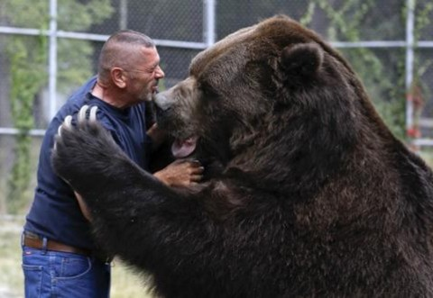 Un bărbat a fost mușcat chiar de ursul pe care îl rănise cu o zi înainte
