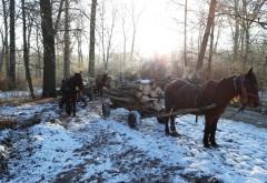 """Caravana"" de carute venita la furat de lemne, prinsa in flagrant de politistii din Plopeni"