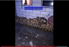 Perchezitii in Valenii de Munte, la persoane banuite de taieri ilegale/ VIDEO de la actiune