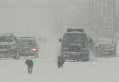 COD GALBEN de ninsori şi depuneri îngheţate