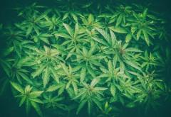 Enoriaşi drogaţi la slujbă. De ce a folosit un preot marijuana în loc de tămâie PRO TV