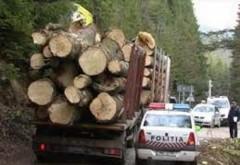Acțiuni in Prahova pentru depistarea transporturilor ilegale de materiale lemnoase