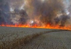 Prahova, mistuita de incendiile de vegetație uscata!