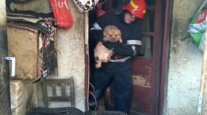 Incendiu in Ploiesti, pe strada Calimani. Pompierii au salvat 3 catelusi si 5 pisici