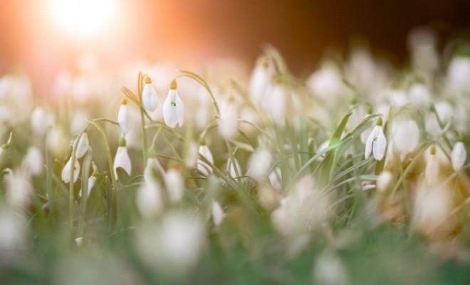 VREMEA. Ce vreme aduce primăvara. Cât de cald se face