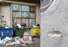 Gunoaie si sobolani morti, chiar sub nasul Sanepid! Imagini apocaliptice în Ploiești