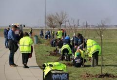 Peste 1.500 de copaci plantați de voluntari în Parcul Municipal Vest din Ploiești. Viceprimarul Ganea, la lopatã, alaturi de ploiesteni