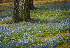 VREMEA DE PAȘTE. Prognoza meteo pentru Florii și Paște