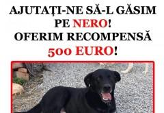 Apel disperat pe Facebook pentru gasirea lui Nero!