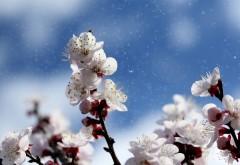 VREMEA de Florii și de Paște. Prognoza meteo pentru următoarele două săptămâni