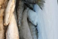 PERICOL alimentar, depistat de ANPC - Pește STRICAT, vândut în containere pline cu sânge