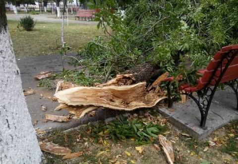 Furtuna face ravagii in Ploiesti. Copaci rupti si acoperisuri smulse de vant