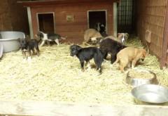 REPORTAJ VIDEO. Adoptă un câine de la adăpostul de la Bucov și vei câștiga cel mai bun prieten!