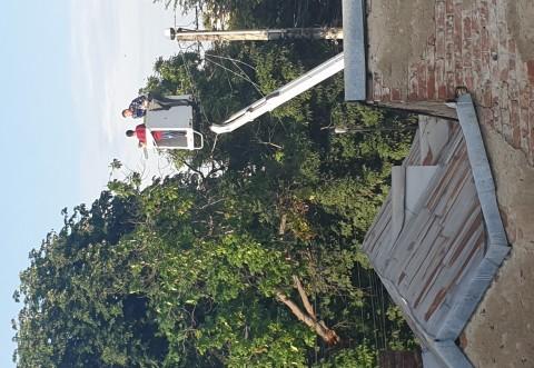 Pana de curent in Ploiesti, zona de sud, dupa ce un castan s-a rupt peste firele de electricitate