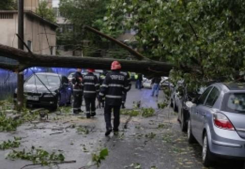DEZASTRU făcut de furtună, în Ploiesti: Copaci cazuti si stalpi de electricitate rupti